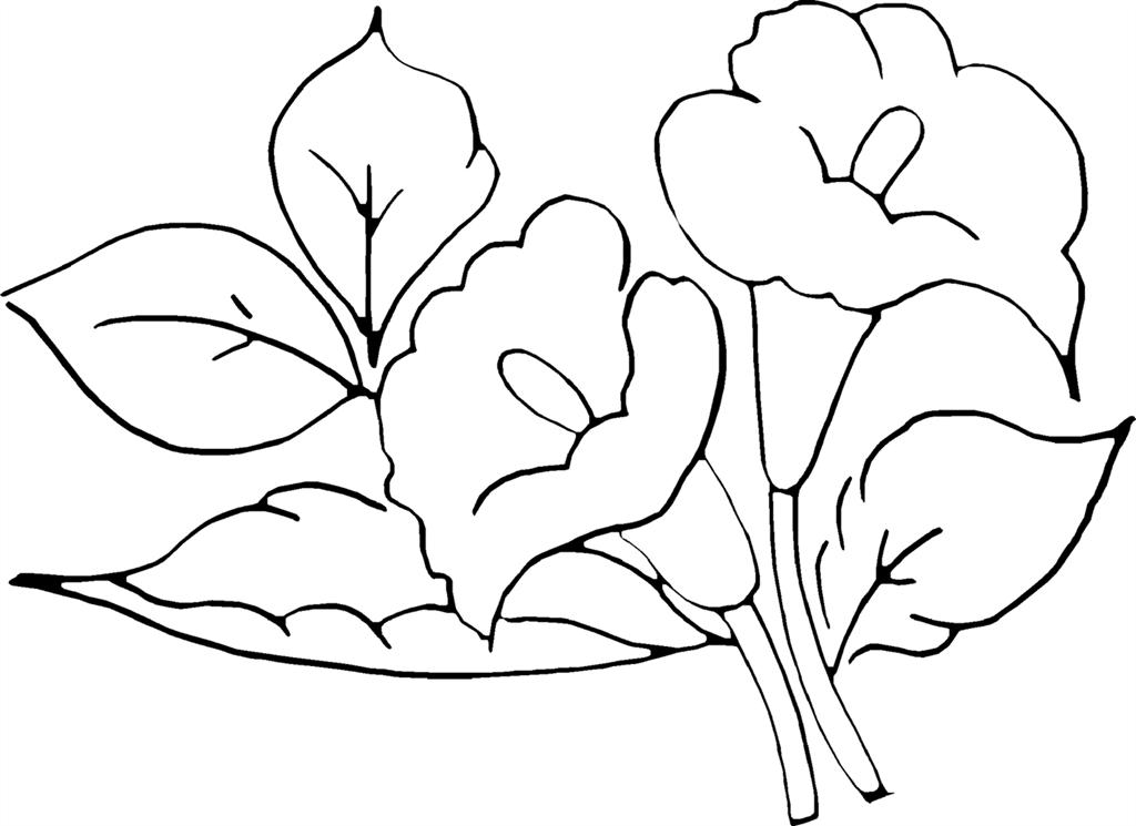 Desenhos De Flores Para Adultos E Crianças Imprimir Colorir