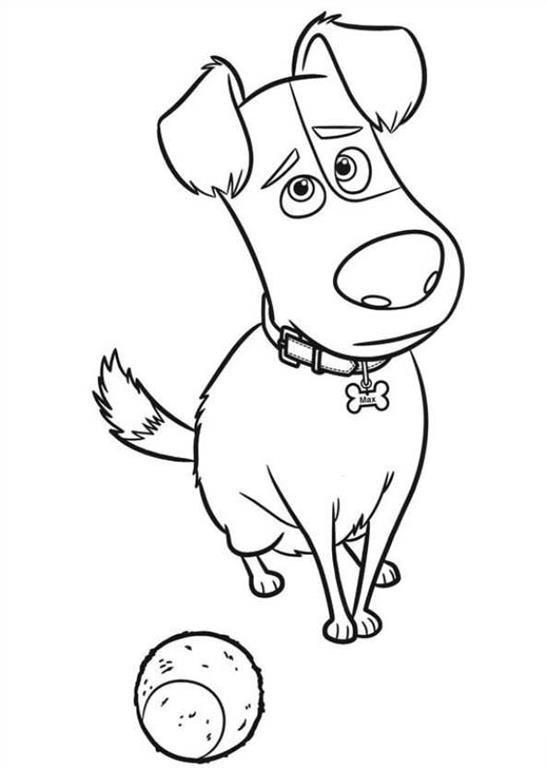 Pets A Vida Secreta Dos Bichos Desenhos Para Colorir Buddy The Coloring Pages